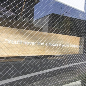 You'll never find a flower if you're looking up.